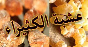 الكثيراء أو الكثيرة للتسمين - عالم حنان يناير 2, 2019