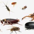 مكافحة الحشرات ورش المبيدات بالرياض | 0552669021 | النخيل كلين